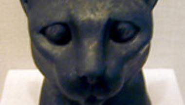 A cicák eredete