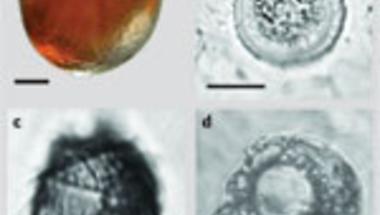 Gyantába fagyott mikrovilág