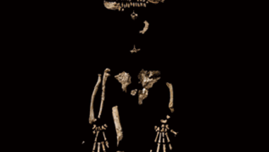 <i>Ardipithecus ramidus</i>