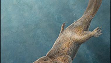 Hódfarkú vidra-hasonmás