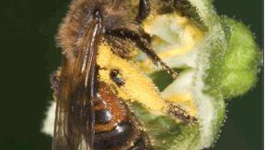 Meddig szállnak még a méhek virágról virágra...?