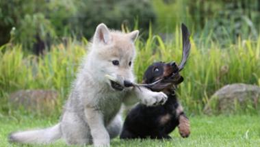 Kutyaősök
