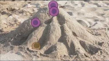 Sokmindent, érthetően, a vérképző őssejtekről