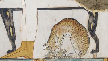 A házimacskák eredete - az archeogenetika szemszögéből