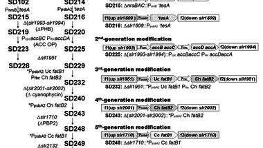 Mire jó a GMO? 15 - Olaj fotoszintetizáló baktériumokból