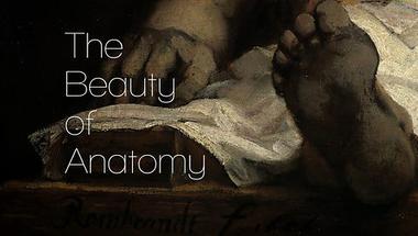 Az anatómia szépsége