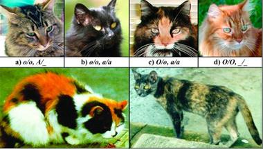 A macskabunda genetikája
