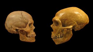 Mit nem adtak nekünk a neandervölgyiek?