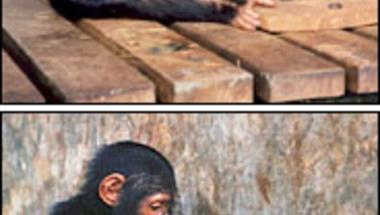 """Ki is akkor az """"utánozó majom""""...?"""
