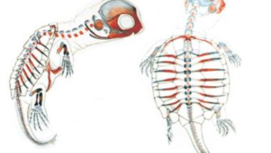 Teknőspáncél