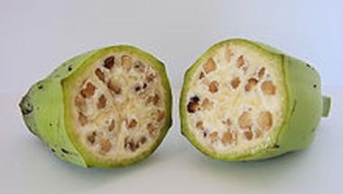 A hagyományos növénytermesztés veszélyei 9. - A banán vírusai