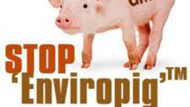 Mire jó a GMO? 6. - Az Enviropig