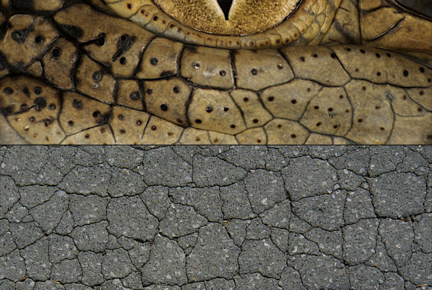 crocodile_skin_cracks.png