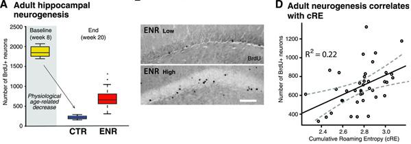 cRE-neurogenesis.jpg
