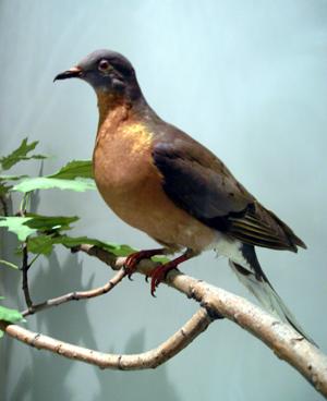 pass_pigeon.png
