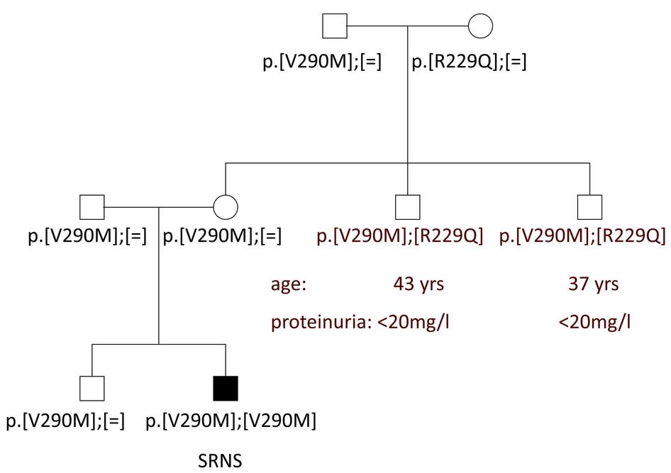 genetika alapjai00.jpg