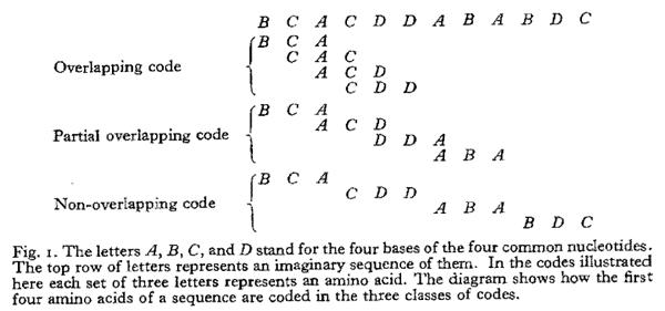 Crick1958-coding_triplets.png