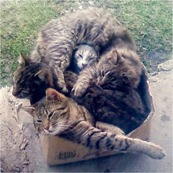box_of_cats.jpg