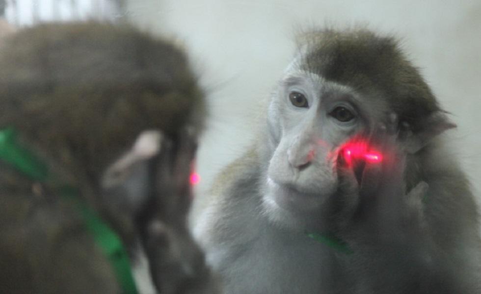 monkey-in-mirror.jpg