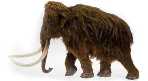 woolly-mammoth-model_82791_1.jpg
