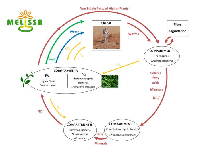 melissa_loop_diagram_node_full_image_2.png