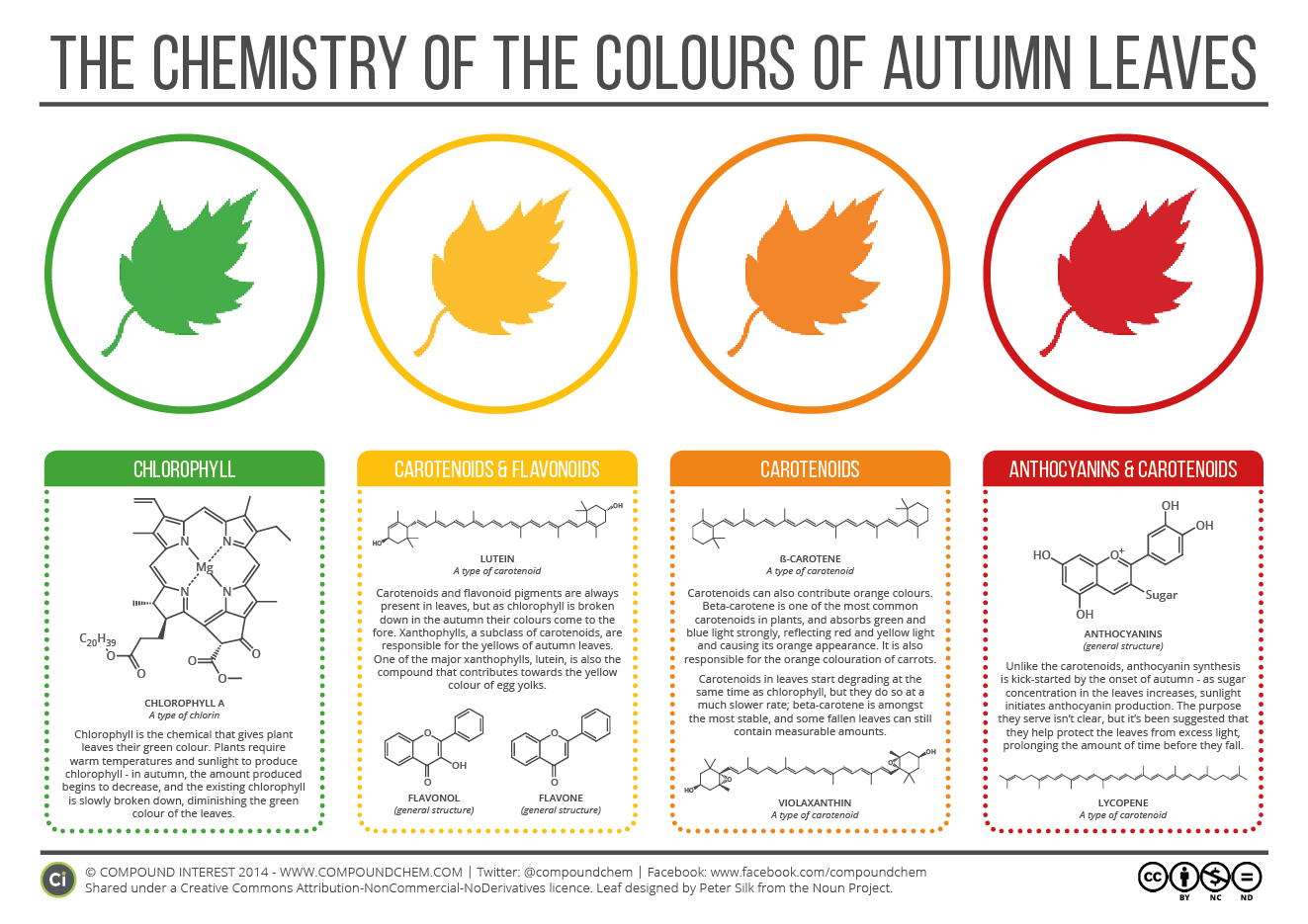 chemistry-of-autumn-leaves-2015.png