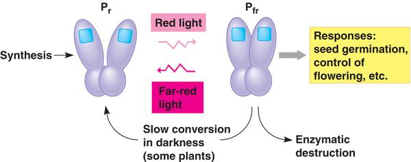 phytochrome_switch.jpg
