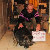 Házi őrizetre ítéltek egy kutyát