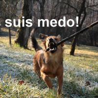 Netes összefogás a kutyák szólásszabadságáért
