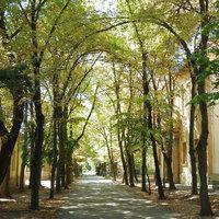 Polgárházak XI. – Deák utca