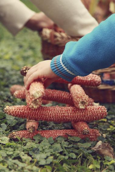 kukorica-9012.jpg