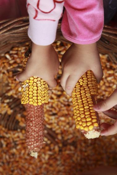 kukorica-9065.jpg