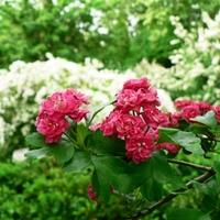 Aki a virágot szereti... - Tavaszi Kiadás - II. Rész