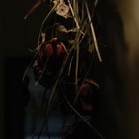 halottvirág