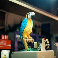 Papagáj Presszó