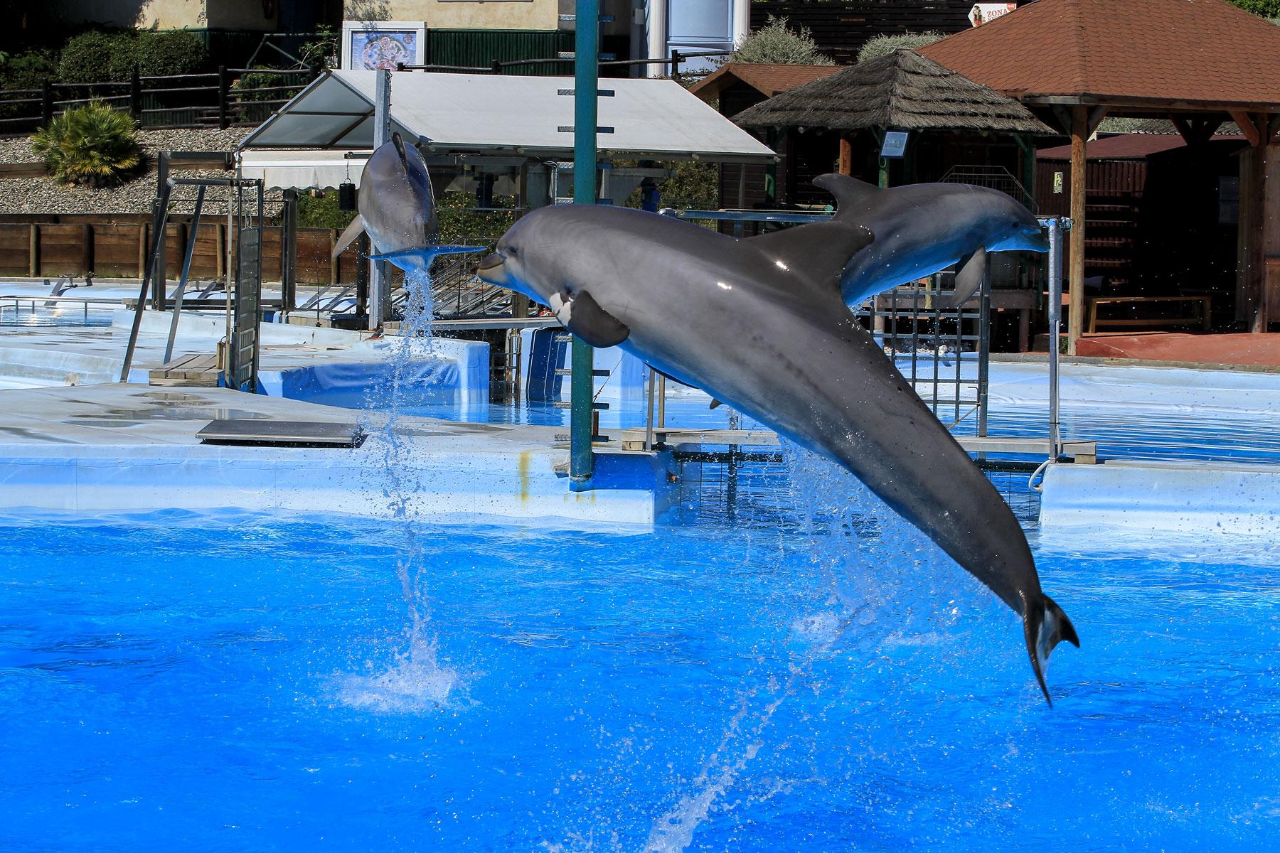 delfinshow_2_k.jpg