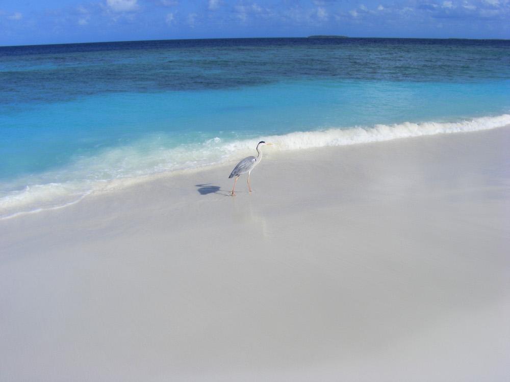 maldive1.jpg