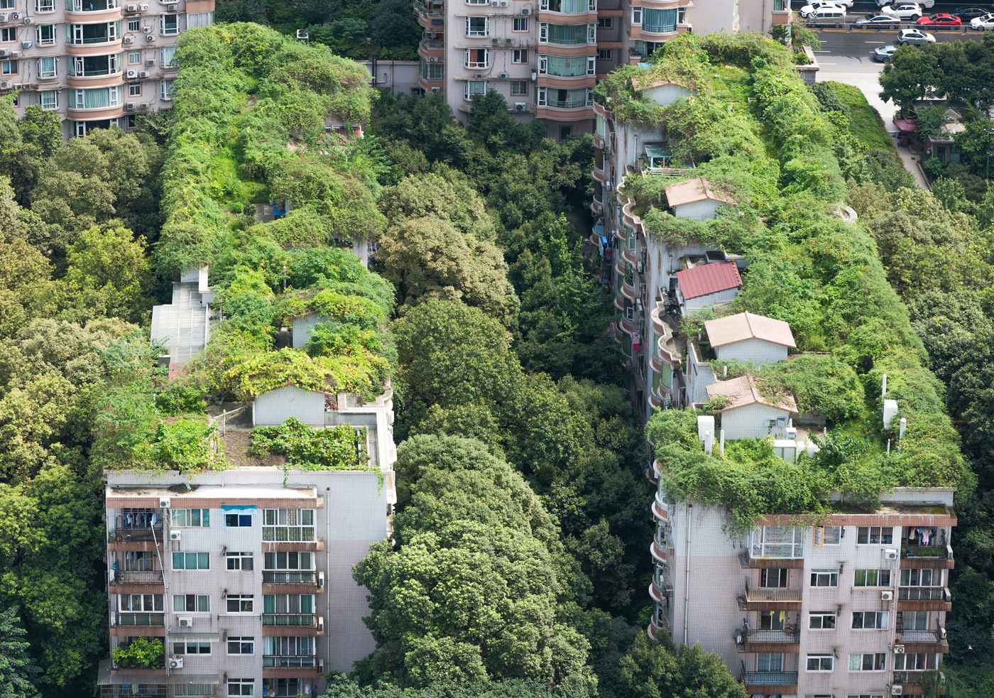 green-roofs-urban-resilience-post.jpg