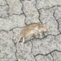 Halál a Nyuszi sétányon