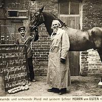A ló, amely jobb matek érettségit