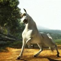 Tíz tévhit lovakról és lovasokról