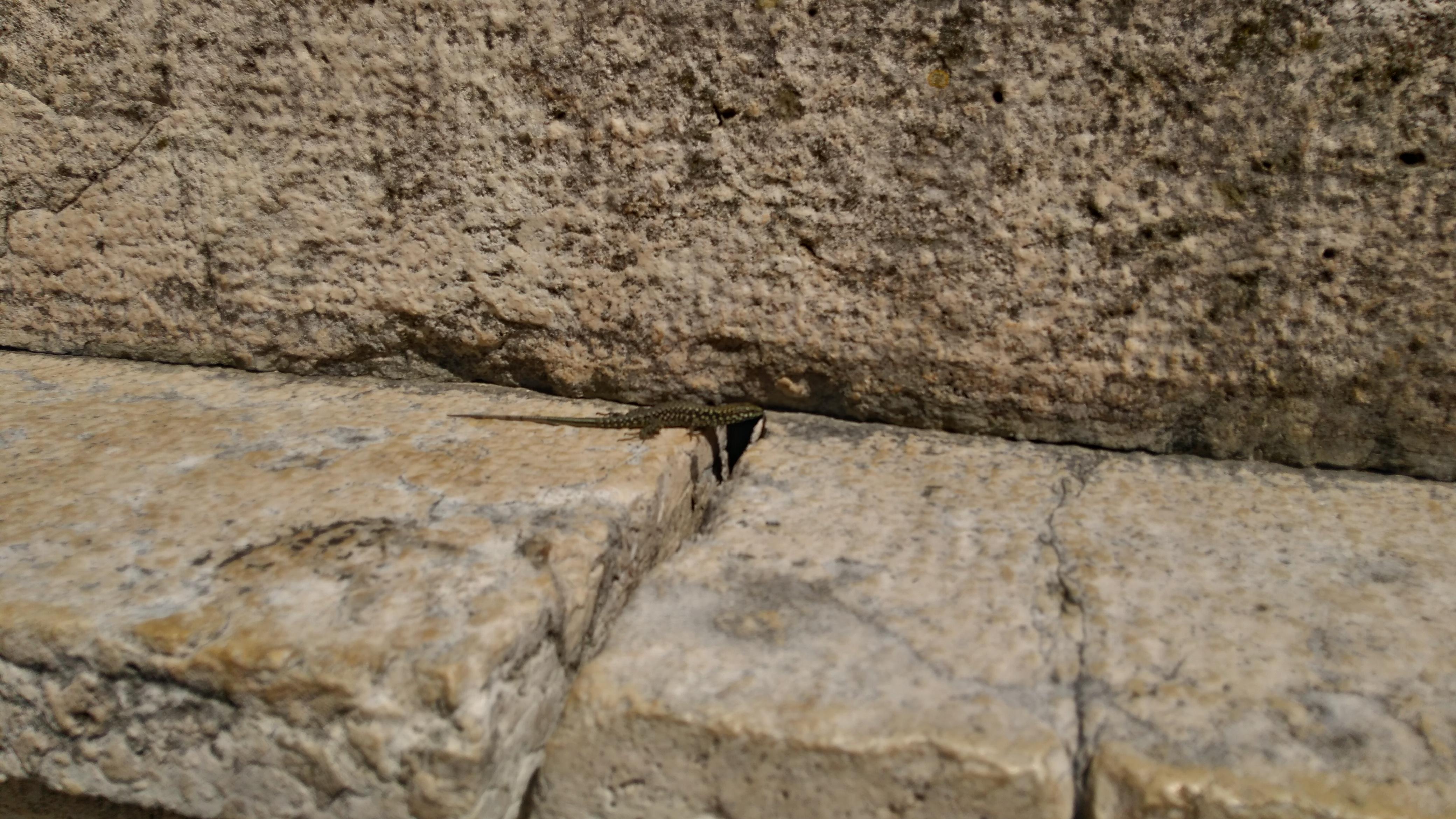 gyík a templom kövein