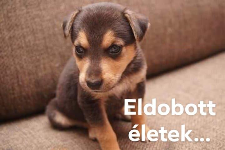 eldobott_eletek_joo_kep.jpg