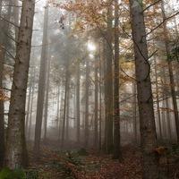 Csendelvonulás – avagy a csend előnyei számodra