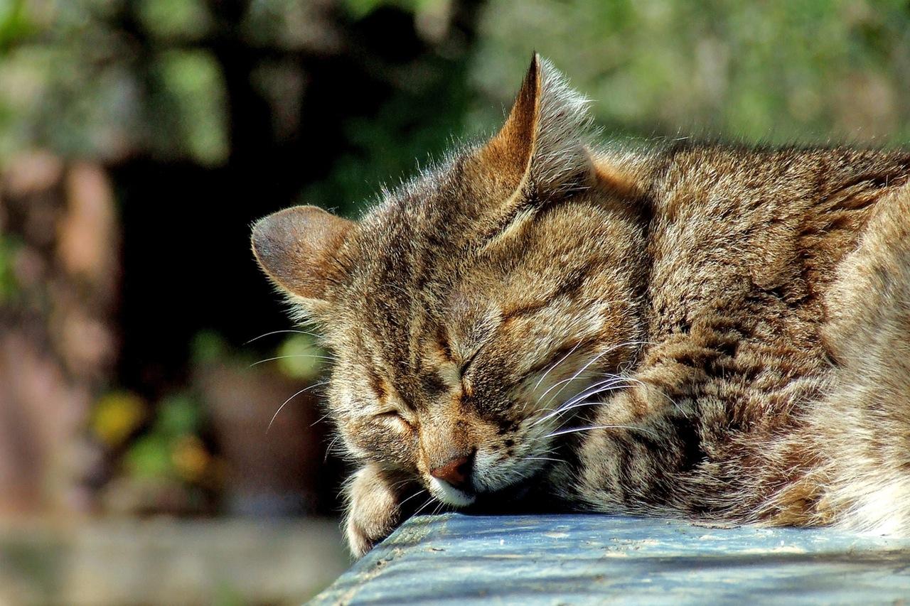 cat-sleeping-garden-domestic-40012.jpeg