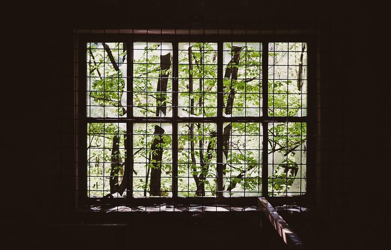 trees-broken-inside-window.jpg