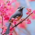 Tavasz kezdete, de milyen tavasz – 2020. március 20.