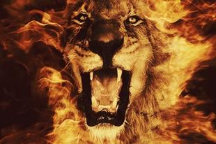 A szerelem időszaka – Nap az oroszlánban – 2019. július 23-augusztus 22.