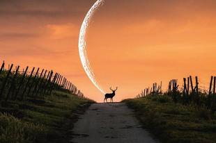 Hold a Nimródban – az előző napok koronázása – 2019. február 14.