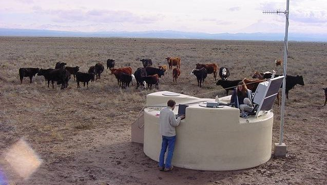 cows2_1.jpg